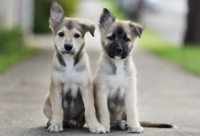 cute, puppies, dog, street