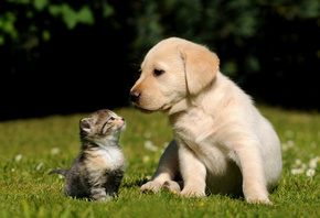 cat, dog, kitten, puppy, grass, background