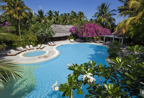 Maldives, bungalow, pool, Sunbeds, Palms, Trees