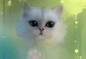 white, cat, eyes