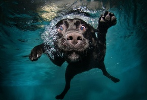 nature, Animals, Dog, Water, Underwater, Bubbles, Muzzles