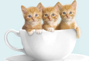 cute, kitten, three, cup, cat