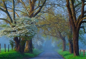 fog, road, tree, morning