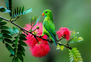 parrot, plant, branch, green