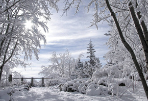 winter, trees, snow, cold, forest