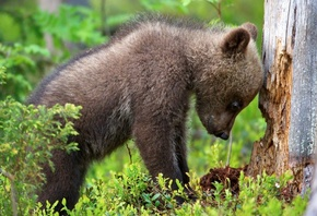 animals, cub, bear, tree, forest