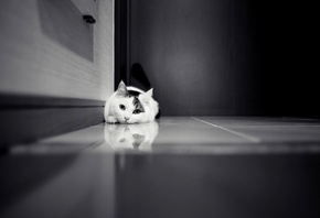 cat, floor, lonely, black and white, котенок, kitten