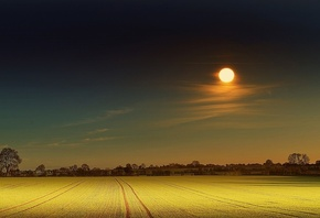 yellow, moon, field, night
