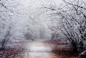 shop, Park, snow, winter, frost, bench, bench, trees, road, nature, shop, b ...