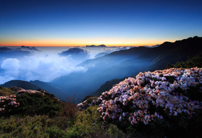 flowers, morning, mountains, fog, the evening, night, hills, the sky, clouds, sunset