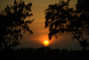 sunset, Nature, trees, silhouette, nature, trees, sunset