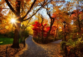 Park, road, leaves, fall, leaves, path, sunset, colors, trees, walk, autumn ...