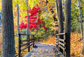 leaves, path, colors, trees, walk, autumn, forest, park, bridge