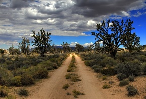 road, desert, USA, Mojave, Joshua Trees
