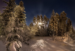 winter, forest, snow, trees, night, the moon, pine