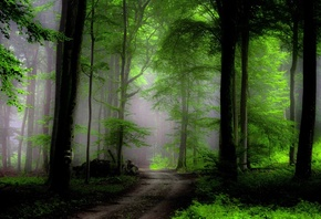 Green, Forest, Plants, Foliage, Path, Earth