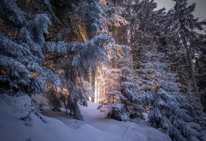 Forest, Snow, Winter, Sunlight