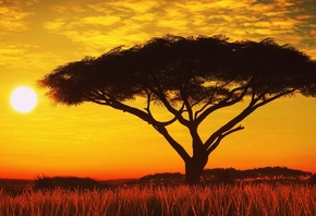 Serengeti, Sunset