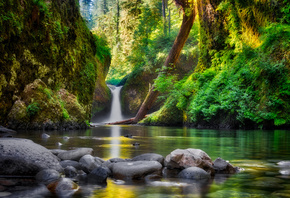 Columbia, River, Gorge, National Scenic Area, Oregon United States, водопад, речка, камни, лес, деревья