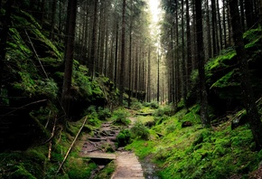 saxon, switzerland, national park, forest, green, path, foliage