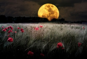 Landscape Nature Wallpapers, nature, Moon