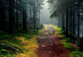 nature, Road, Trees, Forest