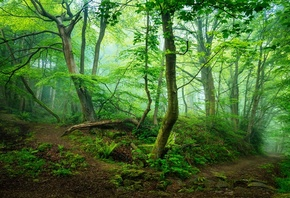 Forest, Landscape, Nature, Tree, Trees