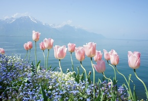 flowers, mountains, spring, tender