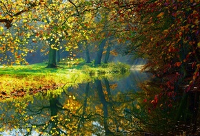 water, forest, reflection, river forest