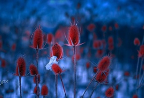 Mevludin Sejmenovic, Blue, Red, Plants