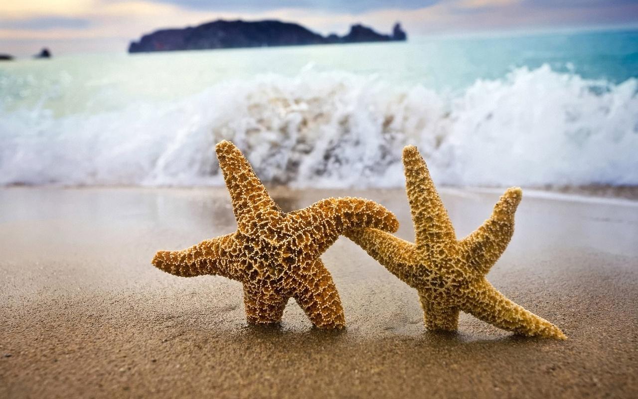 сладкая парочка морских звезд, берег, волна, песок