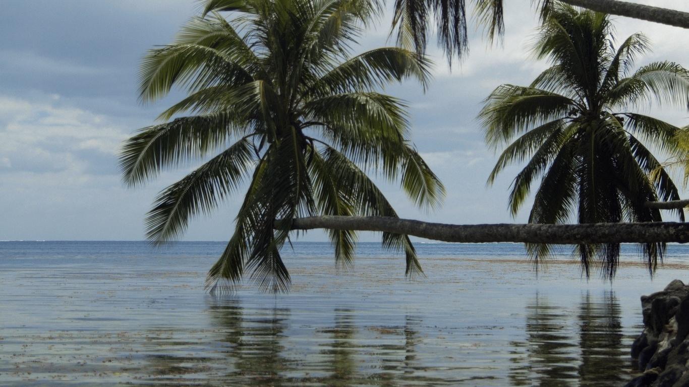 океан, пальмы, синь, облака