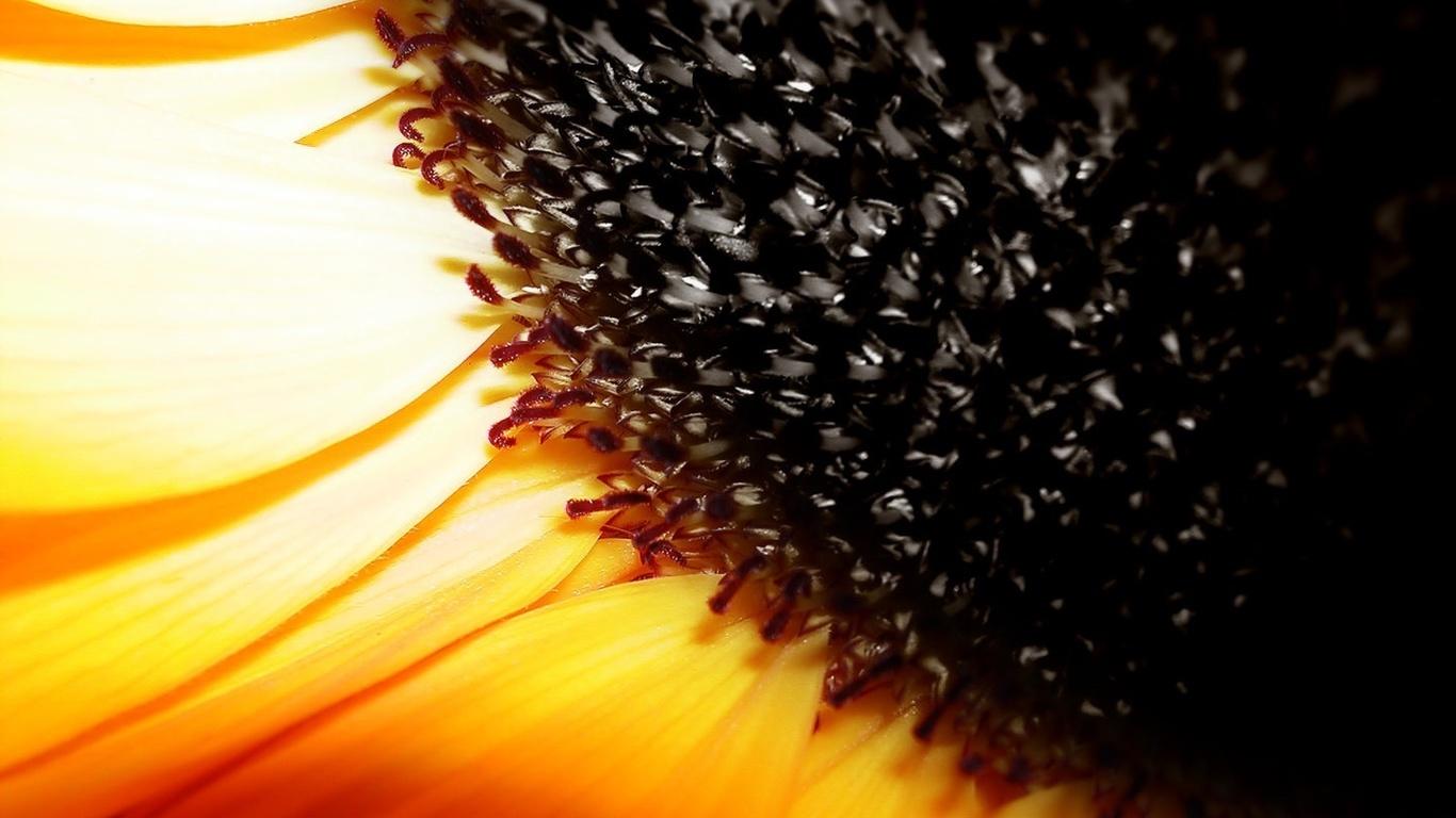 макро, желтые лепестки, пыльца, семена