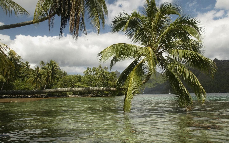 зелень, тропики, ветер, листва