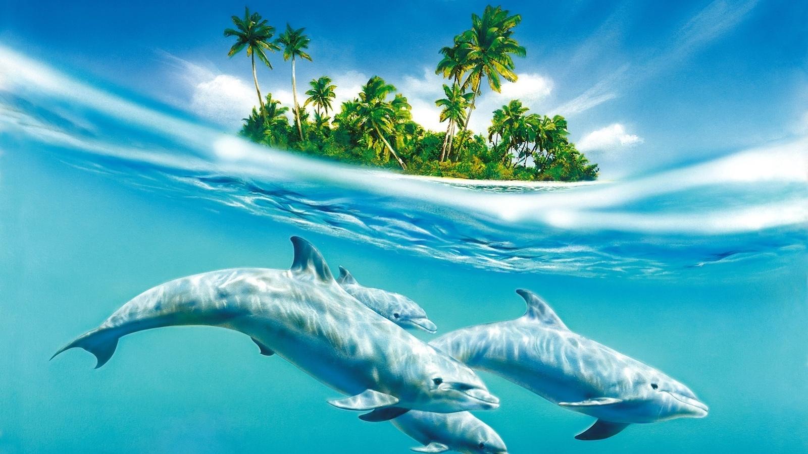 остров, море, дельфины