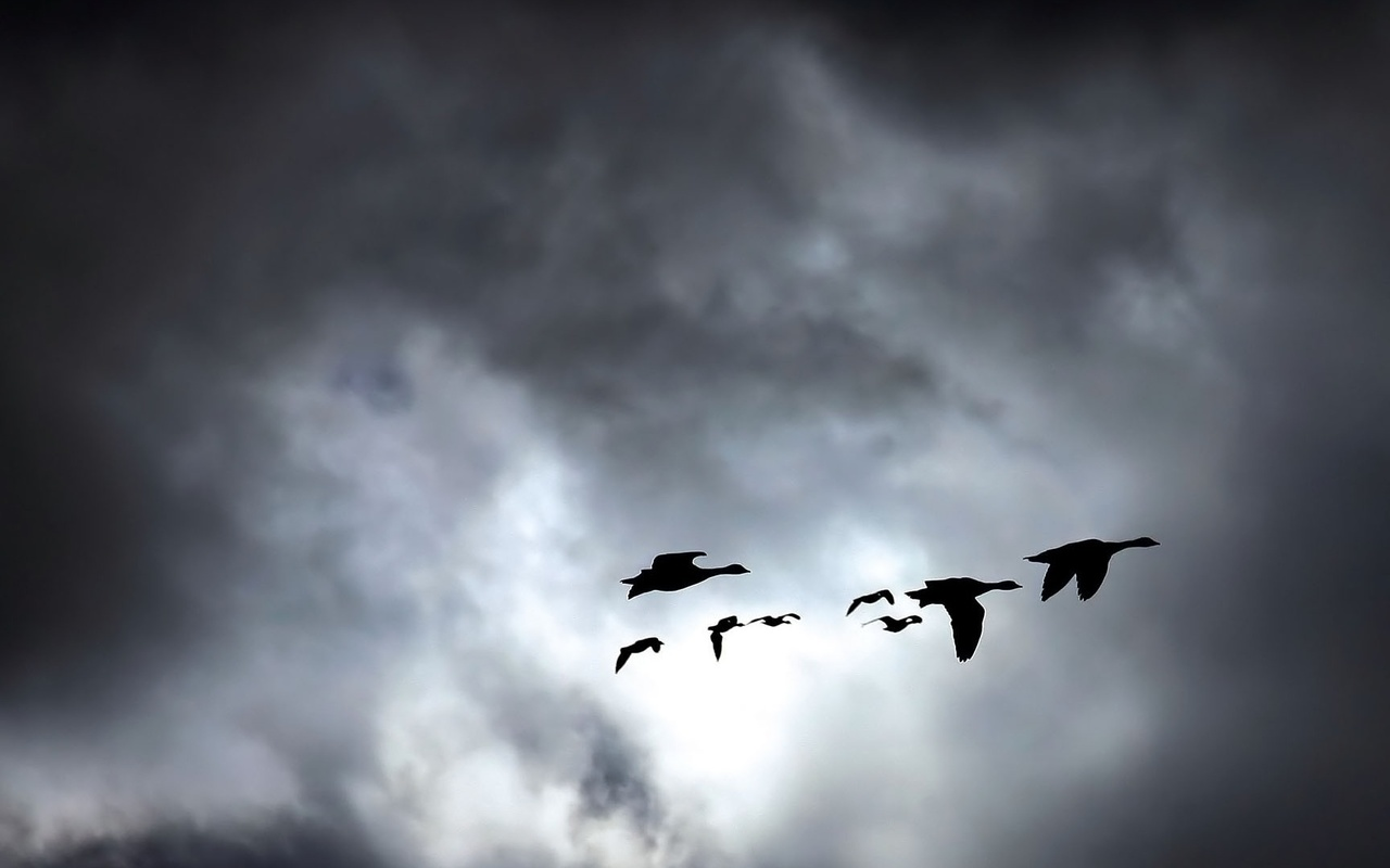 тучи, небо, птицы, тени