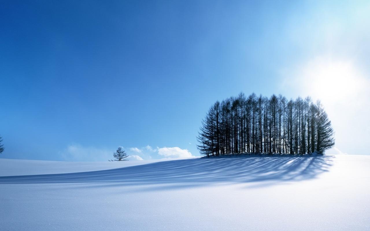 кучка деревьев, зимний ковер, снежок