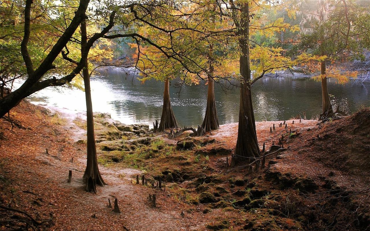 дикая природа, осенняя листва, водичка