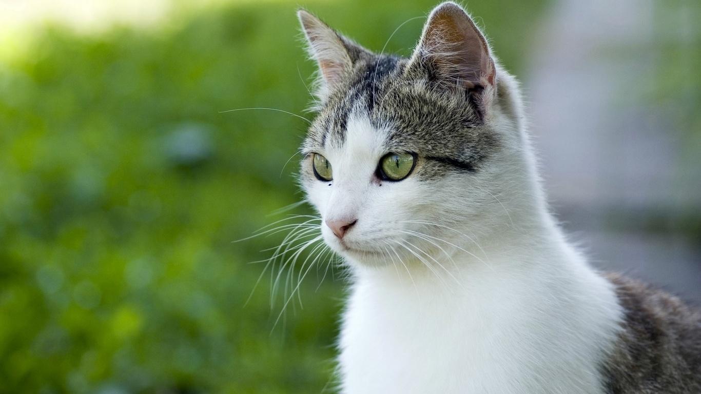 удивленная морда, зеленые глазки, пушистый котик