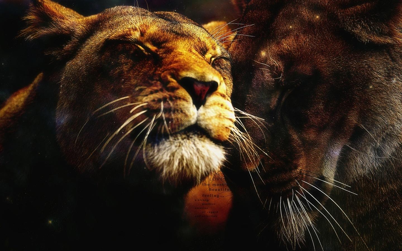 львица, довольная мордашка, зеркальное отображение