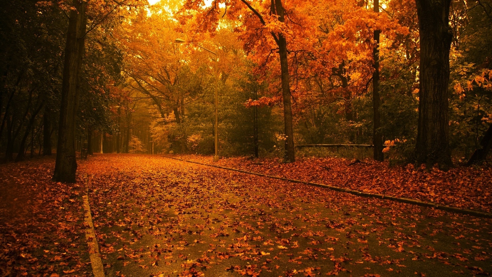 парк, аллея, листва на земле, природа