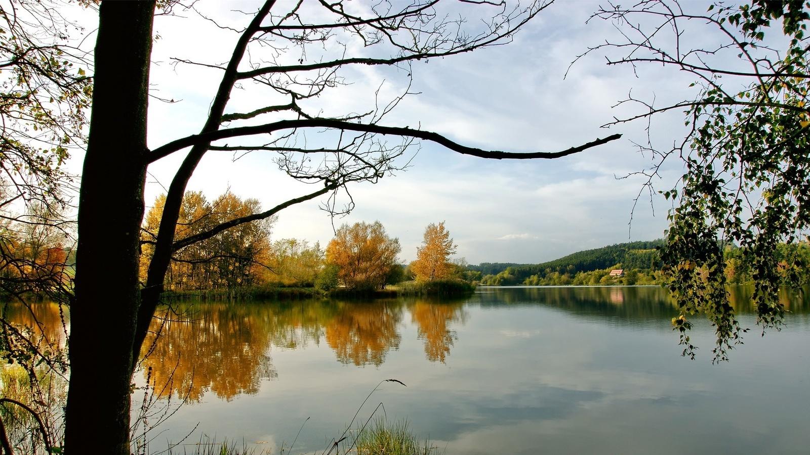 пресная водичка, дикая природа, желтые листья, небо,облака, природа