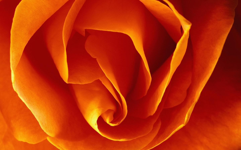 цветок, макро, лепестки, оранжевый
