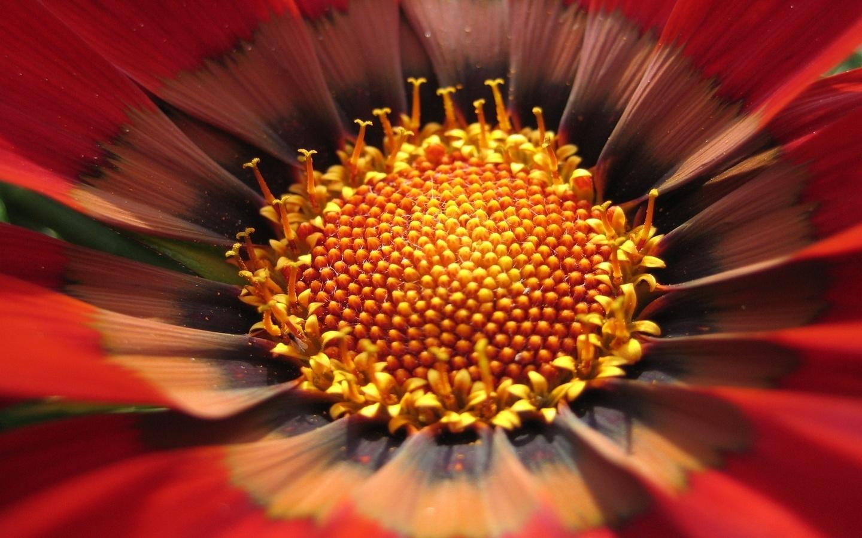 цветок, макро, желтый, центр, сердцевина, пыльца