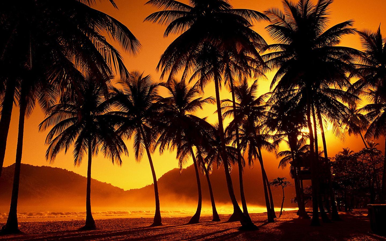 закат, тропики, пальмы, вечер, закат, тропики, пальмы, вечер