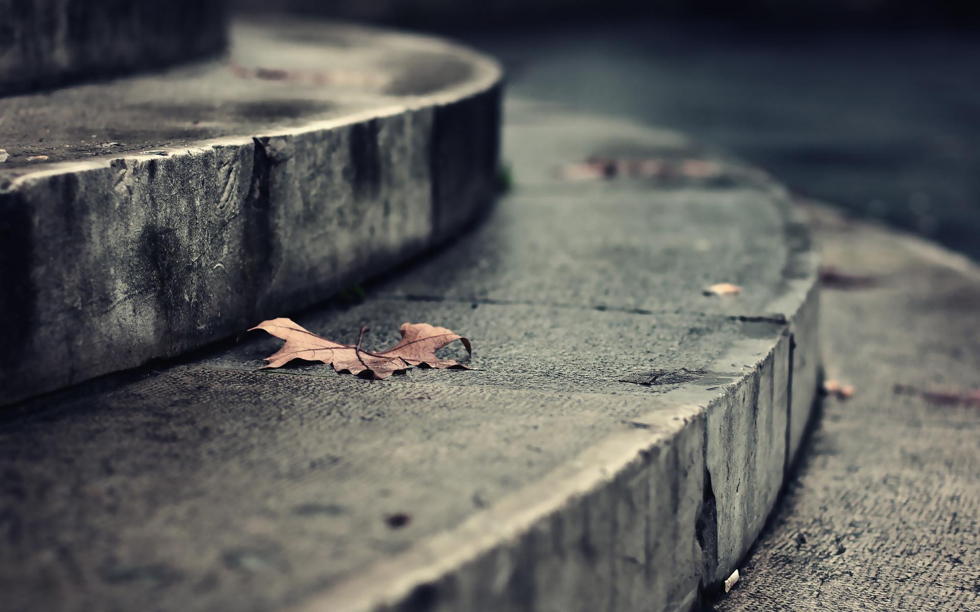 настроение, романтика, макро, листья, осень, осенние обои, ступеньки, лестница, улица, улицы, парк, здание, здания, земля, пол
