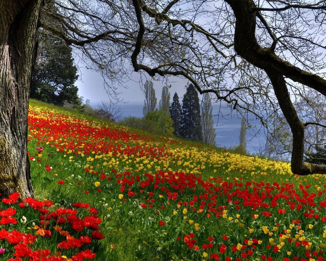 Цветы, тюльпаны, дерево, ветки, весна, природа