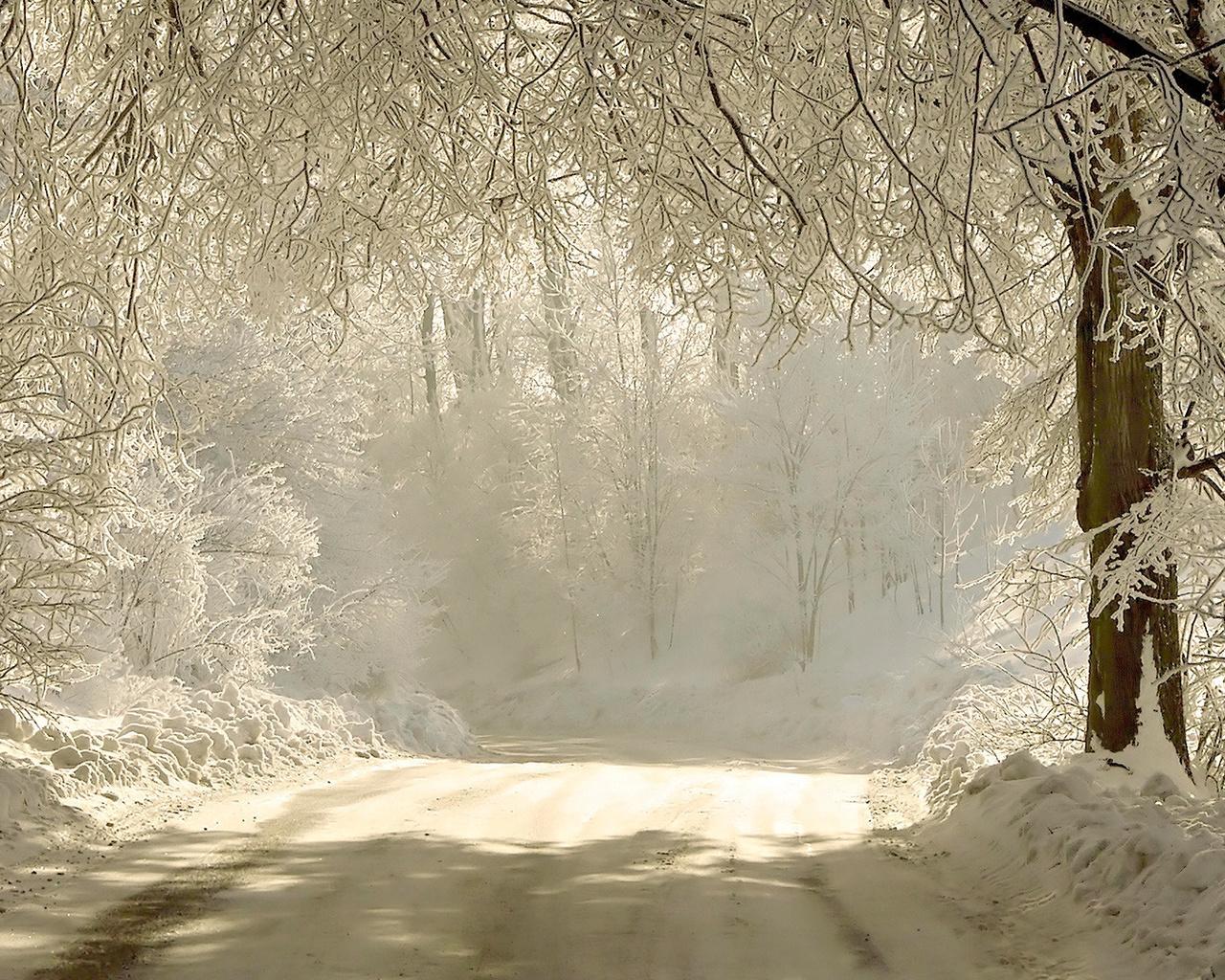 Зима, снег, свет, деревья, ветки, дорога, природа