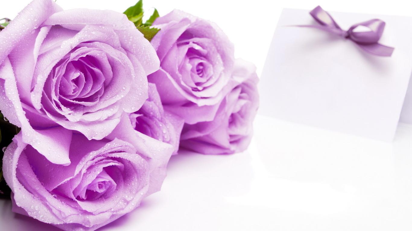 Розы, цветы, фон