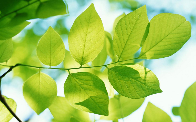 Full hd wallpapers, весна, весенние обои, природа, дерево, листья, макро, фото, красивые обои для рабочего стола